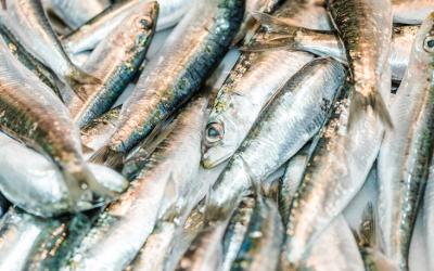 La pesca, agricultura, ganadería, industria alimentaria y sus actividades relacionadas son servicios esenciales.