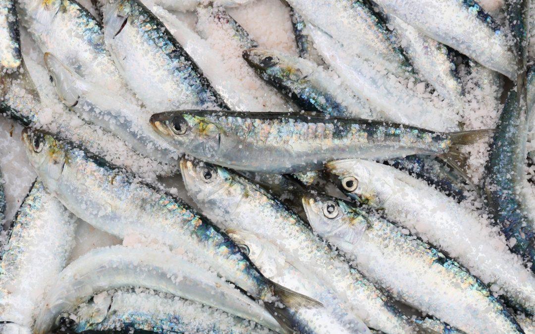 Comienza la campaña de la sardina
